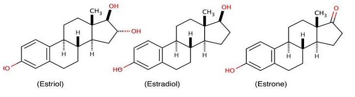 Perbedaan-Estriol-dan-Estradiol
