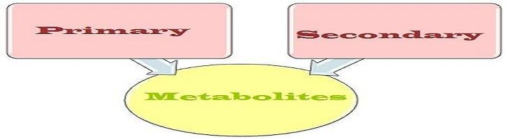 Perbedaan-Metabolit-Primer-dan-Sekunder