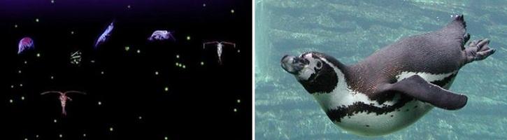 Perbedaan-Plankton-dan-Nekton