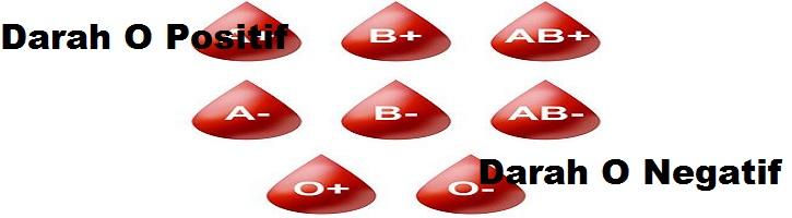 Perbedaan-Golongan-Darah-O-Positif-dan-O-Negatif