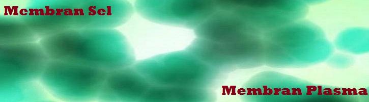Perbedaan-Membran-Sel-dan-Membran-Plasma
