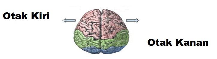 Perbedaan-Otak-Kiri-dan-Otak-Kanan