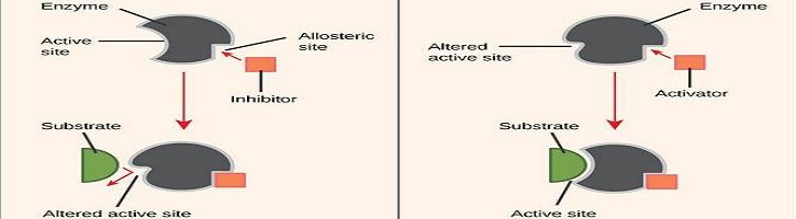 Perbedaan Aktivator Enzim dan Inhibitor Enzim