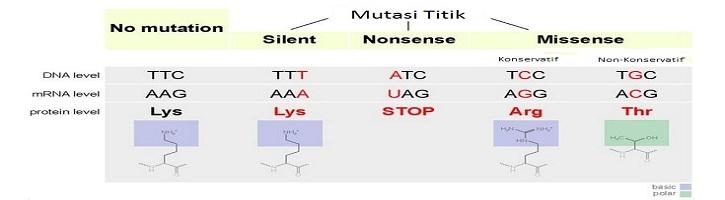 Perbedaan Mutasi Nonsense dan Missense