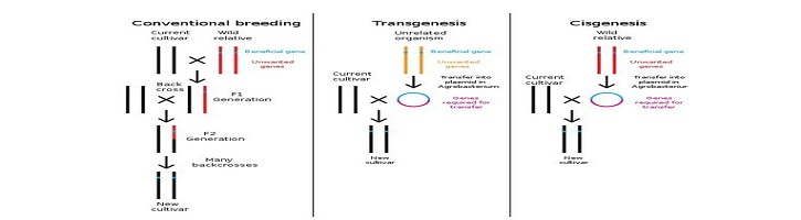 Perbedaan Transgenik dan Cisgenik